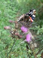 Thistle and butterfly by Drakonee