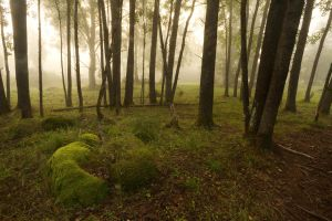 Misty morning in the forest by Antz0