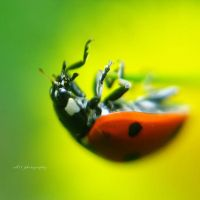 .: ladybug :. by all17
