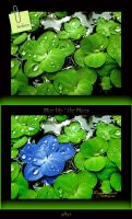 Blue Lily Before-After by MorganaVasconcelos