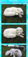 Keiko the Little Arctic Fox by Zhon
