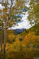 Looking Through the Aspens by mjohanson