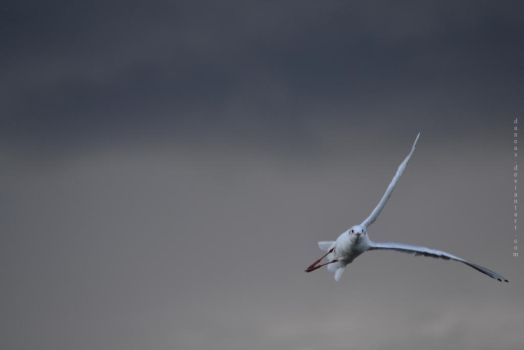 The Gull and the Storm by Daneas