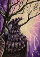 ACEO: Violet Fire by DanielleMWilliams