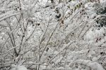 Thanksgiving Snow #2 by jackthetab