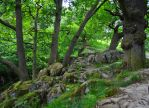 Rocky Woods by Forestina-Fotos
