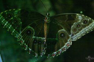 Butterfly by stinq