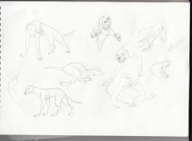 Blind dogs concepts by Astarcis