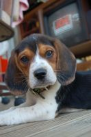 Beagle Puppy by RottingPearlz