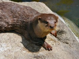 Otters III by Jisei