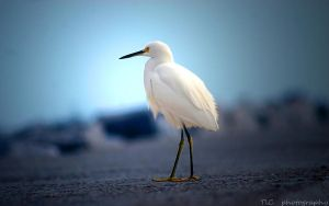Graceful and elegant by TlCphotography730