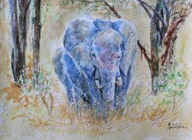 Elephants by danuta50