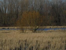 Lake Trail (winter) Marsh 4 by TornPageDyedRed