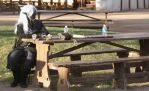 Drow on Bench by FanOfKnives