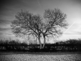 love trees by sparxphoto