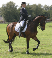 Dressage stock 1 by ByMelody