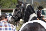 STOCK - Canungra Show 2012 145 by fillyrox