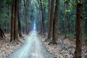Road to no-where by Bhavesh-P