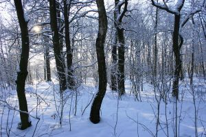 Winter Forest by Lairis77