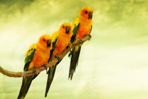 Three Lovely Birds by jamesmaranatha