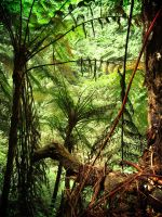 lush forest by 4dreamer