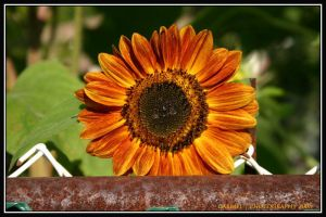 over the fence by Nariane