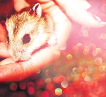 Holiday Hamster. by xJNFR