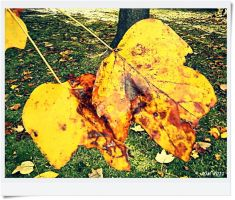 Fall Time! by JDM4CHRIST