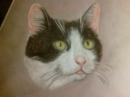 rufus the cat by smurfpunk
