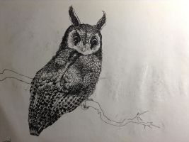 Long-eared Owl by Cypselurus