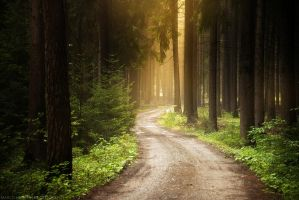 Forest Story by MarcoHeisler