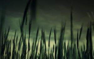 Dark Field by niklasK