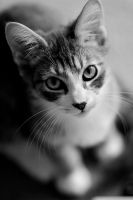 Dexter 135mm BW by geeewocka