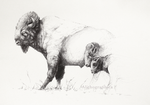 American Bison by Alithographica