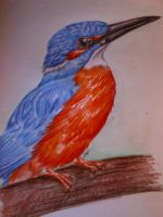 Kingfisher Coloured 2 of 2 by Elhanna