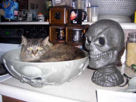 Cat in Bowl by Paige-1