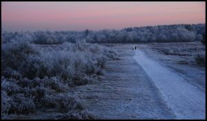 Walking on the frosted heath by jchanders