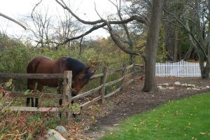 Bay Horse biting Fence :stock: by 1w1w