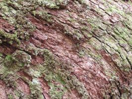 1000 Year Old Tree Bark by DustwaveStock