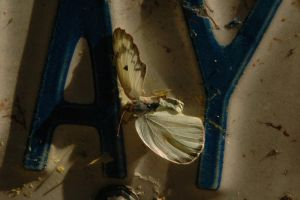 Moth in the Licence Plate by WoodsieWood