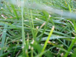 A bug's view of Grass by Rosie311
