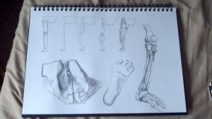 Feet And Legs study by PaulDS89