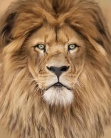 Portrait of king by Kansey20