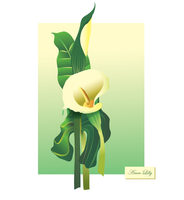 Arum Lily by Weegraphicsman