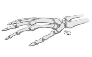Skeleton Hand Study by spiketail94