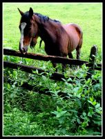 horse by LunchBoxN1NJ4