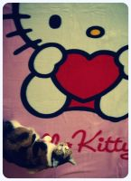 give me my kitty by star37luminaire