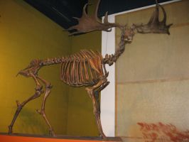 Irish Elk by Fireborn46