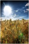 Summer time HDR by Initio
