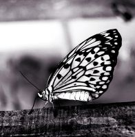 Butterfly 1 by Voodoo-Dollie